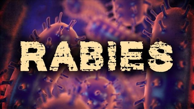 RABIES_1525722493935.jpg