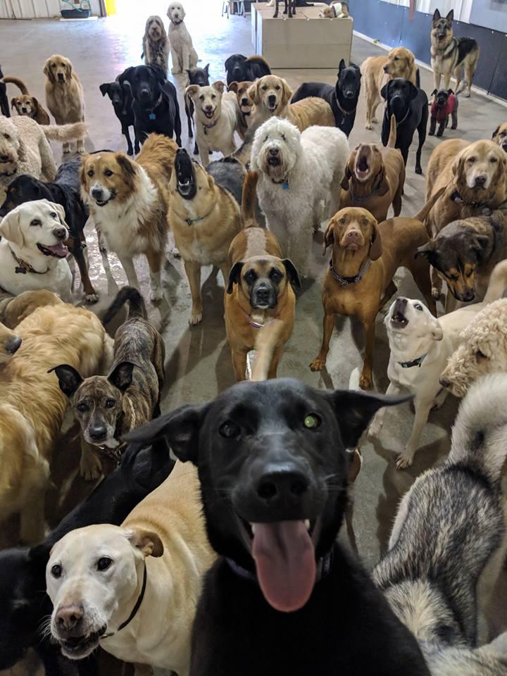 dog selfie_1526052083248.jpg.jpg