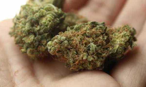 medical-marijuana-generic_1523455150117_39659819_ver1.0_1280_720_1524173293472_40166767_ver1.0_640_360_1531063360075.jpg