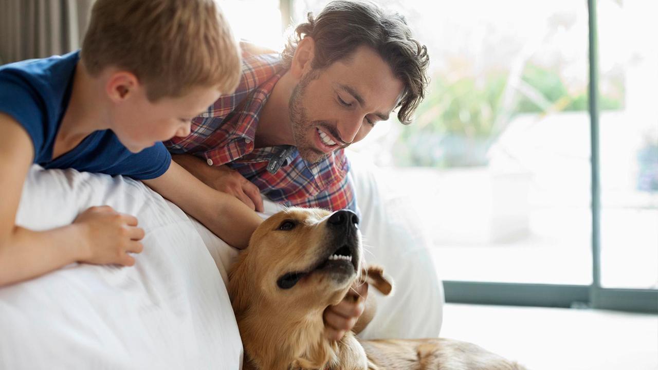 dog-pet-family_1529341822370_379442_ver1_20180619055401-159532
