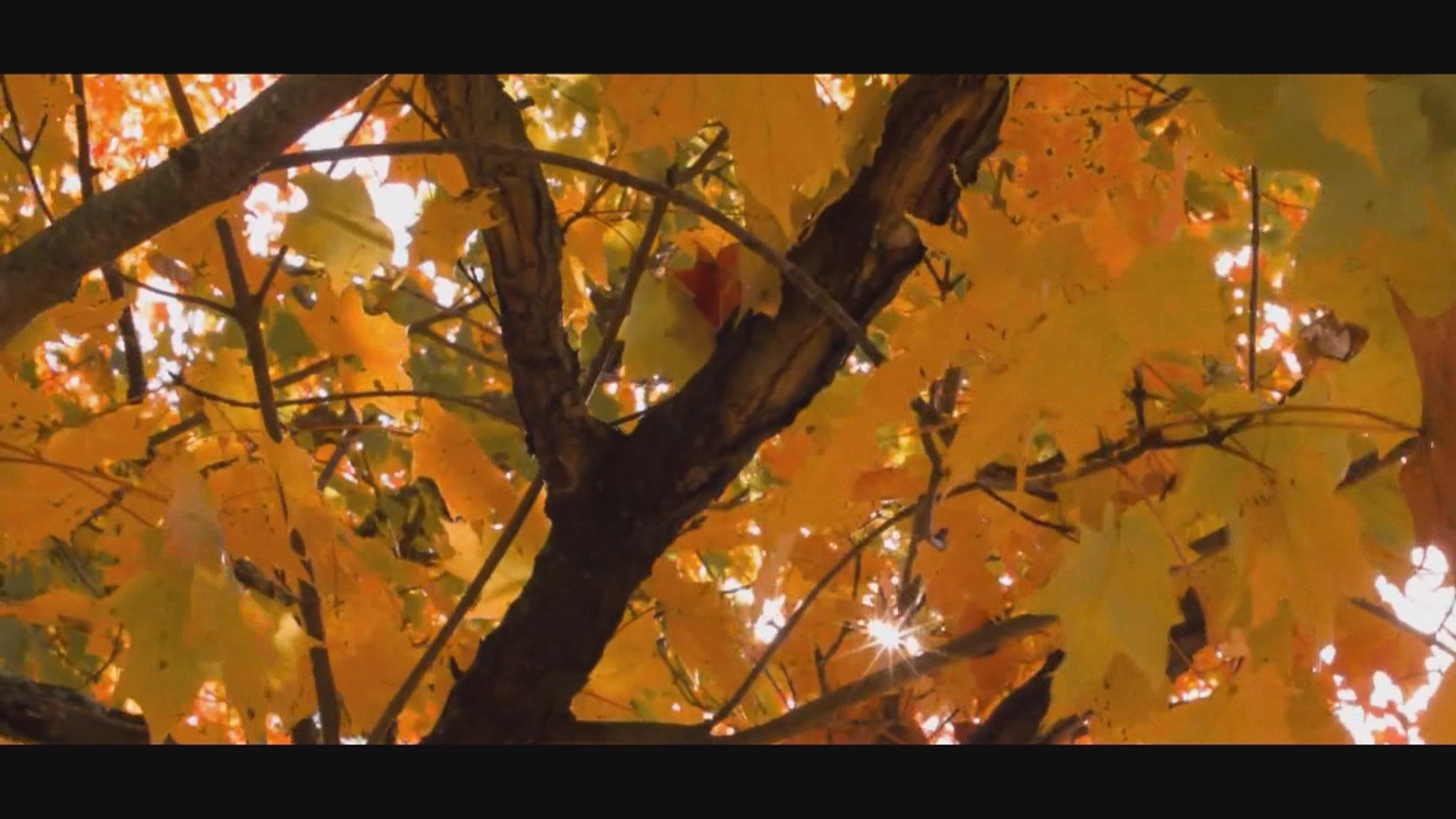 Fall leaves_1536009061268.jpg