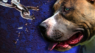 DOG FIGHTING_1540156401337.png.jpg