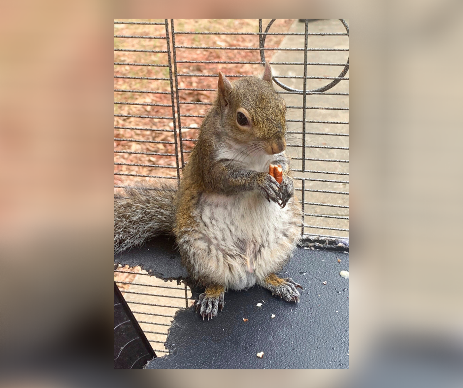 Authorities: Alabama man fed meth to caged 'attack squirrel