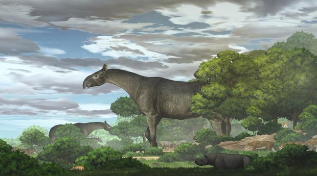 New fossils reveal one of the largest land mammals ever found — and it's a giant rhino